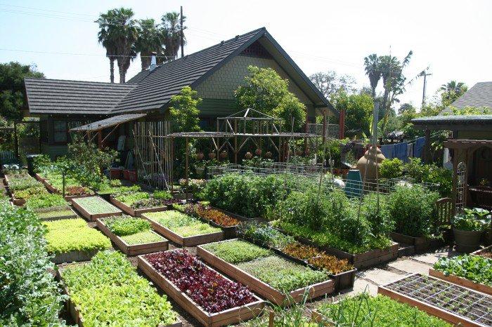 400m2 Garten in Los Angeles produziert 2000kg Nahrung pro Jahr