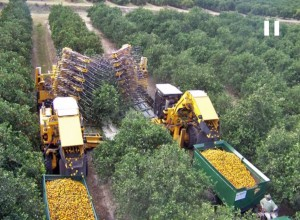 orange tree harvesters from above