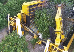 orange tree harvesters from above2