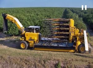 orange tree harvesters side