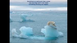 Norbert Rosing - Churchill Monitoba - Polar Bears play with Dogs - Screenshot from 2016-03-30 12:07:38