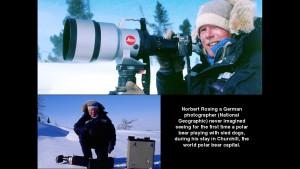 Norbert Rosing - Churchill Monitoba - Polar Bears play with Dogs - Screenshot from 2016-03-30 12:08:05