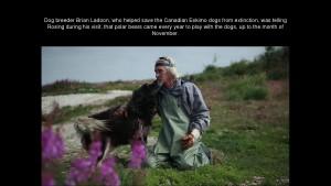 Norbert Rosing - Churchill Monitoba - Polar Bears play with Dogs - Screenshot from 2016-03-30 12:08:12