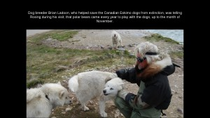 Norbert Rosing - Churchill Monitoba - Polar Bears play with Dogs - Screenshot from 2016-03-30 12:08:18