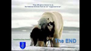Norbert Rosing - Churchill Monitoba - Polar Bears play with Dogs - Screenshot from 2016-03-30 12:11:10