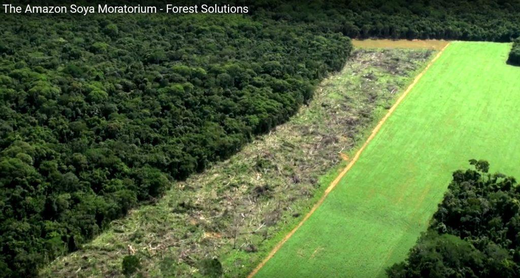 deforestation soya amazonas