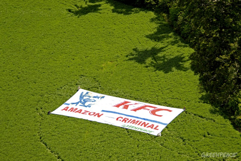 May 17th. 2006. Santarem (Amazon, Para State, Brazil) Greenpeace volunteers displayed a 300 square metre banner on a soya plantation grown in the heart of the Amazon rainforest, accusing fast food company KFC of Amazon crimes. KFC is fuelling the destruction of the Amazon by selling cheap chicken fed on soya grown on deforested Amazon land. The expansion of soya is one of the leading causes of forest destruction in the Amazon. Greenpeace/Markus Mauthe