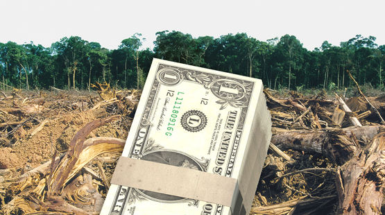palm-oil-investition-dollars