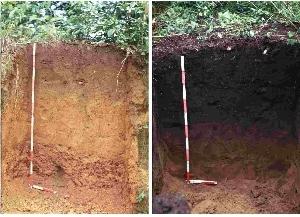 terra_preta_crop-to-the-left-an-oxisol-poor-in-nutrients-typical-of-the-amazon-basin-right-oxisol-transformed-into-fertile-terra-preta