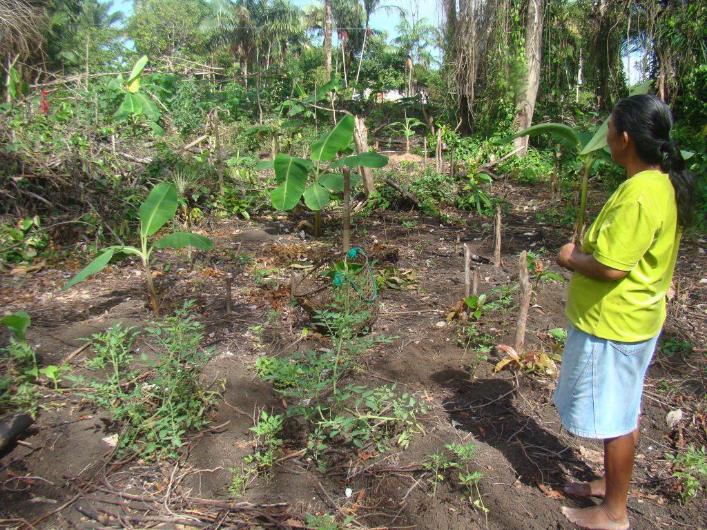 Sistema Agroflorestal da Marieta